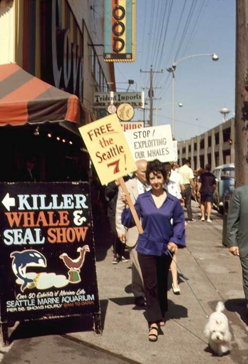 whaleseattle7protest-web
