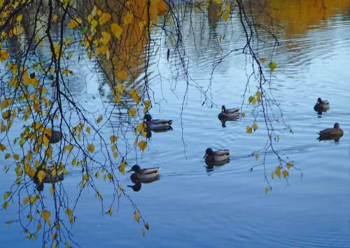 When John Sundsten sees ducks in a row or two rows he also sees patterns of synapses and sub-arachnoid spaces filled with gray and white matter in great splendor.