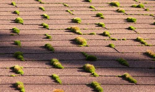 Hair cells in the Cochlea (auditory receptors) - roof moss.