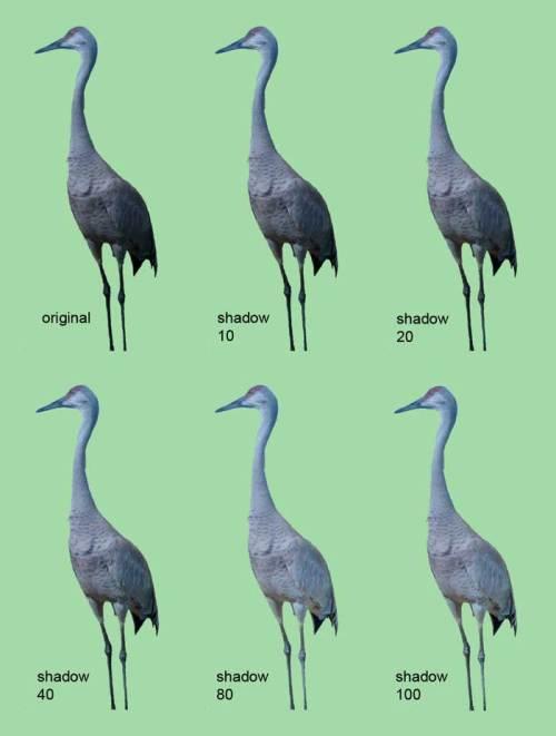 xpootbirdshadow-web
