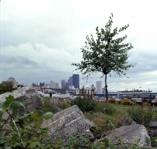 """Concrete Block, Tree on Fill Area North of Alaskan Way, May 23, 1975.  [With his fascination for the dumped concrete blocks Frank Shaw was looking south through the location of SAM's future Sculpture Park.]"