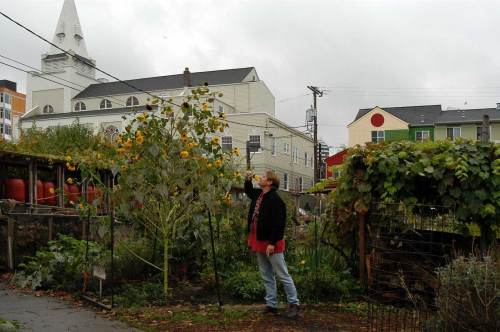 This new one was taken by Berangere - of this blog - in 2006 when both were visiting:  the one from Paris and the other from California.  Here is Bill kissing a sunflower in the Cascade P-Patch and not far from where his bedroom was comfroted him at night.