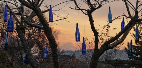 Blue-bottles-hanging-WEB