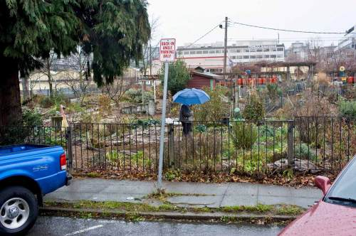 NOW: The school was damaged by the 1949 earthquake and removed.  These homes were razed in the early 1980s and replaced first by a play area for day care.  Since 1996 the corner has shined with one of the city's many community gardens or P-Patches.  Jean Sherrard's winter repeat may be complemented with the Cascade P-Patch's own blog at http://cascade-ppatch.blogspot.com/  (Now photo by Jean Sherrard)