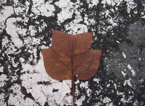 Parking-Leaf-mr-12-5-7-WEB