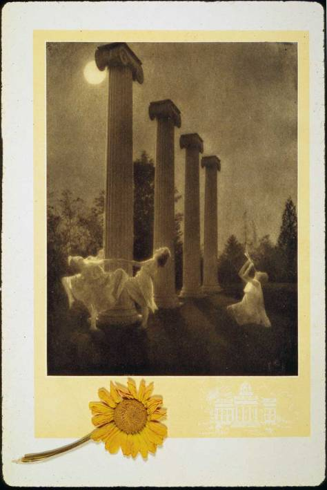 Another early view of the Columns in a ritual enactment of ecstatic dance exposed under a full moon.  The flower, we don't know.