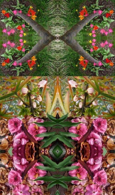 Wallingford Flora - 4/19/10