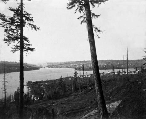 Lake Union from Capitol Hill, early 1890s.